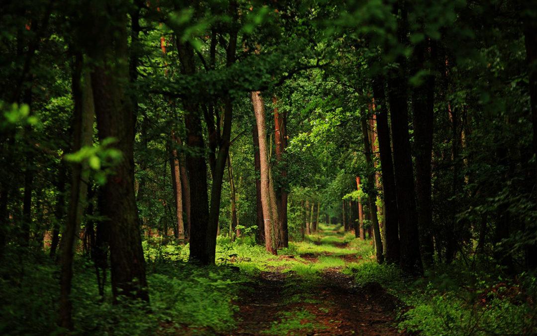 Ekologiczna postawa ECO iS EASY